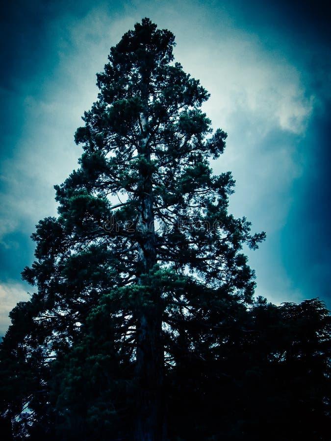 Vue étroite d'un arbre sur un fond bleu-foncé de ciel en brouillard photos libres de droits