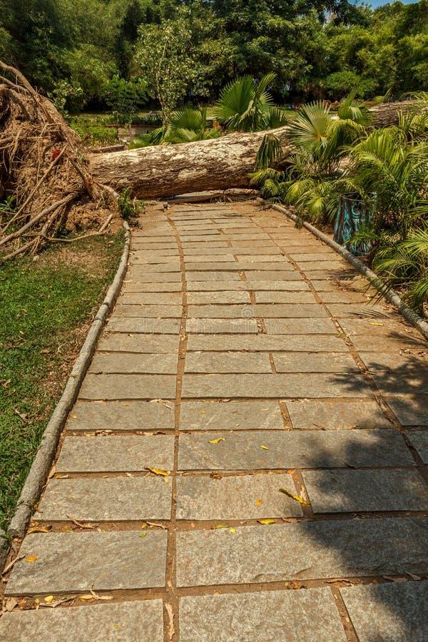 Vue étroite de jardin vert avec l'herbe, les arbres, les usines, les bois coupés d'arbre et la voie, Chennai, Tamil Nadu, Inde, l image stock