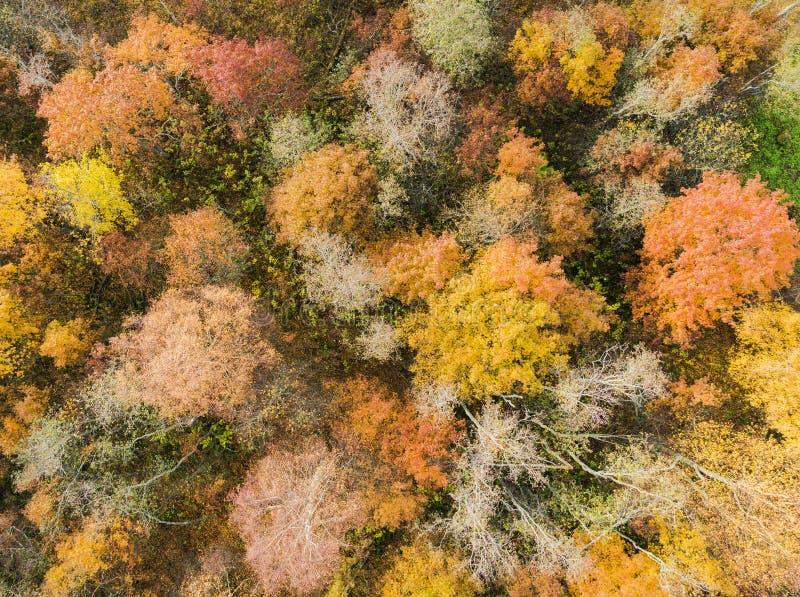 Vue aérienne au-dessus de forêt pendant des couleurs vibrantes d'automne Vue aérienne des bois Vue aérienne de bourdon de forêt a photo stock