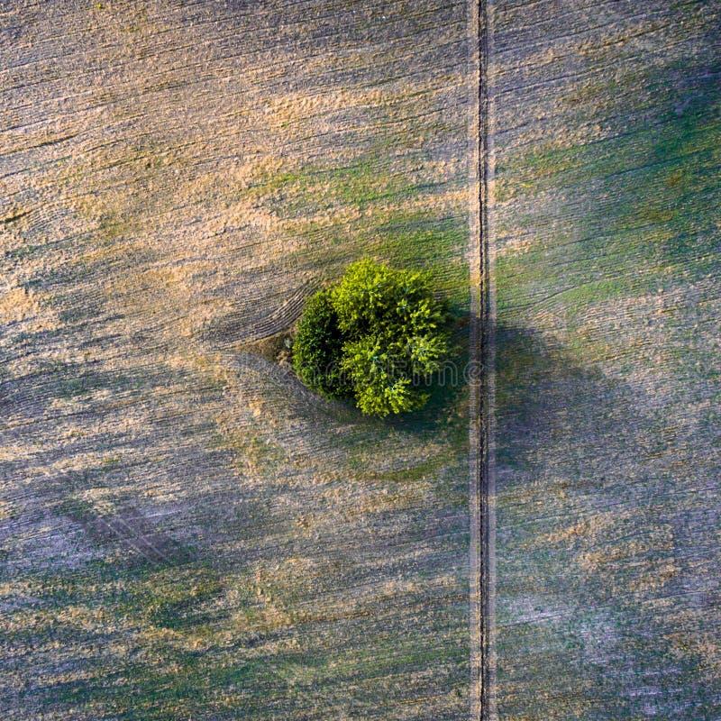 Vue aérienne au-dessus des champs, de la route et de l'arbre biseautés agricoles images libres de droits