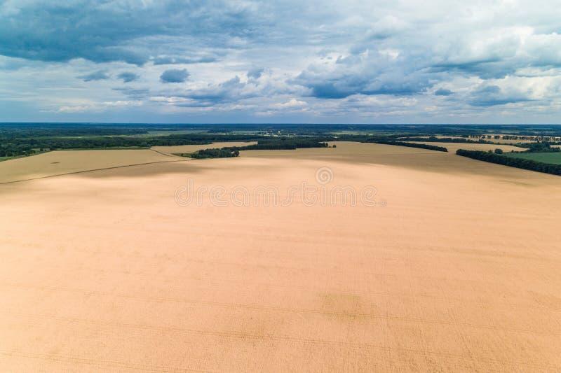 Vue aérienne d'un champ de blé et d'un ciel nuageux bleu image libre de droits