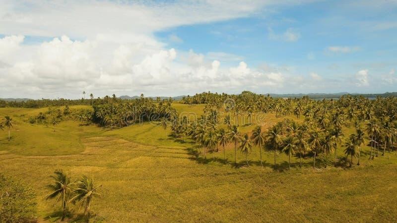 Vue aérienne d'un gisement de riz Philippines, Siargao images stock