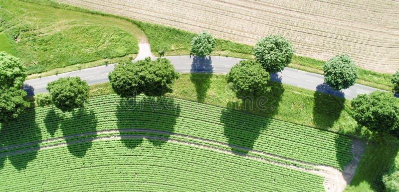 Vue aérienne d'une courbe d'un chemin avec les arbres verts magnifiques le long de la route photos libres de droits