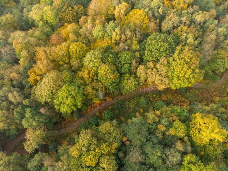 Vue aérienne d'une ruelle de pays sur la forêt d'automne images libres de droits