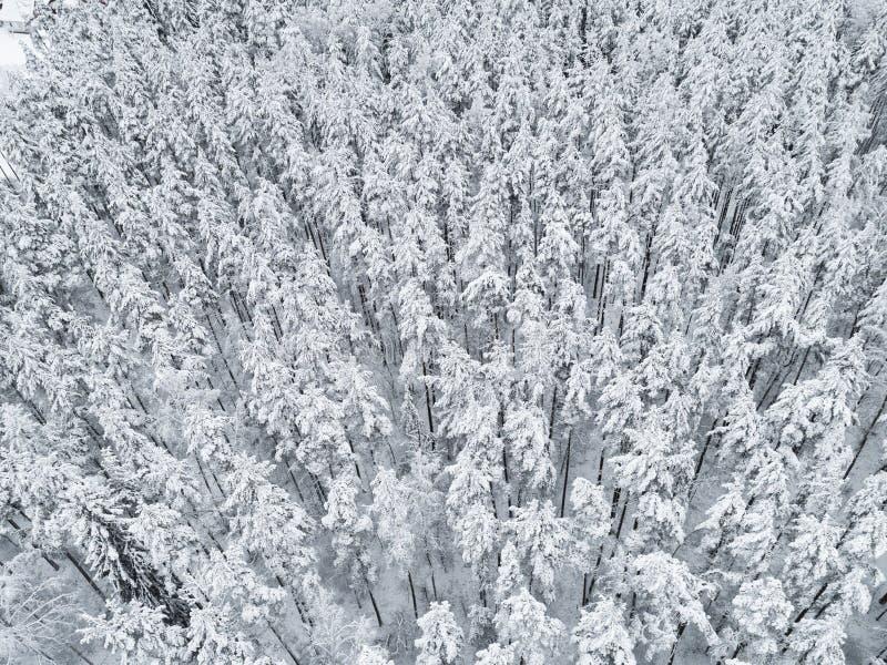 Vue aérienne d'une texture couverte de neige de forêt d'hiver de forêt de pin d'hiver Silhouette d'homme se recroquevillant d'aff photos stock