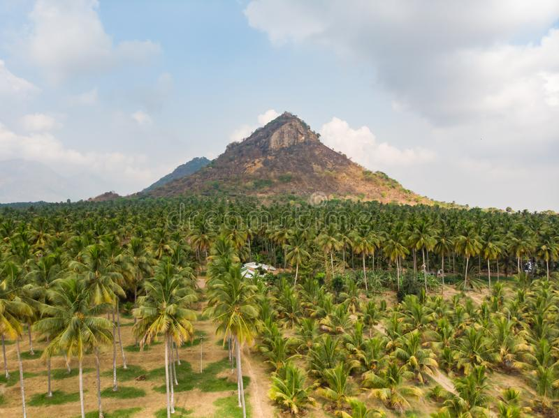 Vue aérienne de ferme de noix de coco avec la montagne dramatique et le ciel bleu opacifié image stock