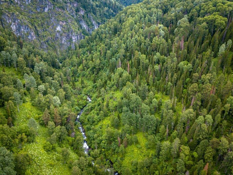 Vue aérienne de forêt avec beaucoup d'arbres coniféres verts entre les montagnes d'Altai avec un courant ou la petite rivière ave image stock