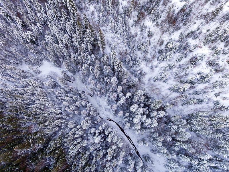Vue aérienne de forêt d'hiver couverte dans la neige photographie de bourdon - image panoramique photos libres de droits