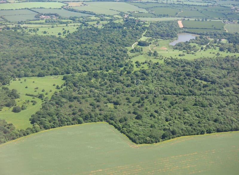 Vue aérienne de forêt de Hatfield photographie stock