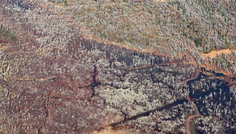 Vue aérienne de forêt du Texas photographie stock libre de droits