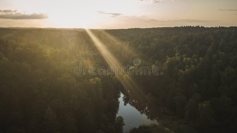 Vue aérienne de forêt pendant le coucher du soleil d'été photo stock