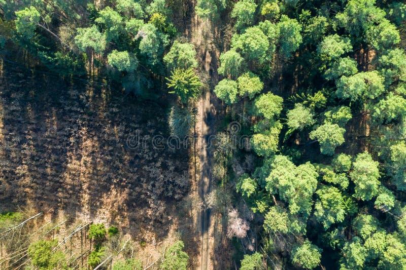 Vue aérienne de forêt stupéfiante avec les arbres multicolores, Pologne photographie stock libre de droits