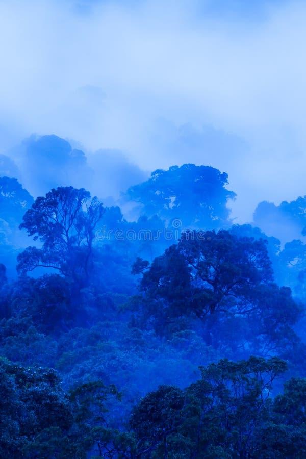 Vue aérienne de forêt tropicale antique dans brumeux bleu, art de la forme des arbres sauvages le matin pluvieux photos stock
