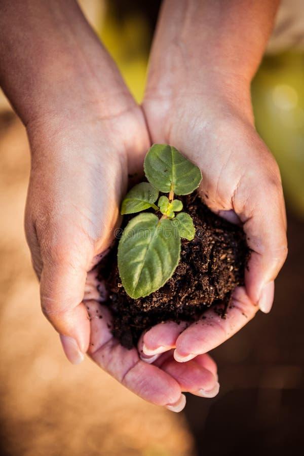 Vue aérienne de jeune plante dans des mains au jardin photos libres de droits