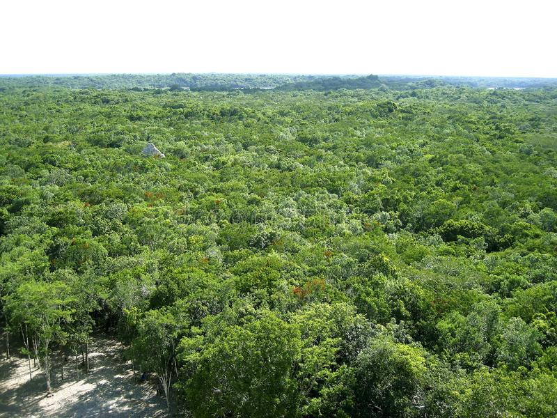 Vue aérienne de jungle en Amérique Centrale Mexique photo stock