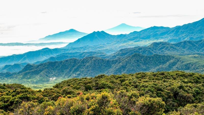 Vue aérienne de la vaste zone de la forêt, suivie de la colline brumeuse et photographie stock