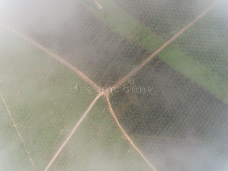 Vue aérienne de plantation d'huile de palme avec le brouillard ou les nuages situés dans le krai de Kuala, Kelantan, Malaisie, l' photos stock