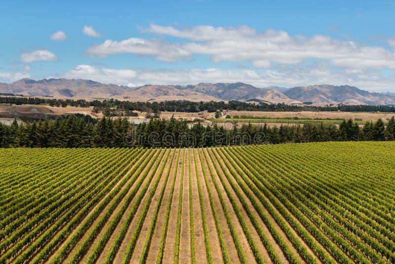 Vue aérienne de plantation de vignoble photos stock
