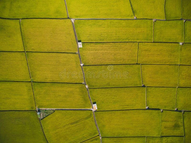 Vue aérienne de rizière photos libres de droits