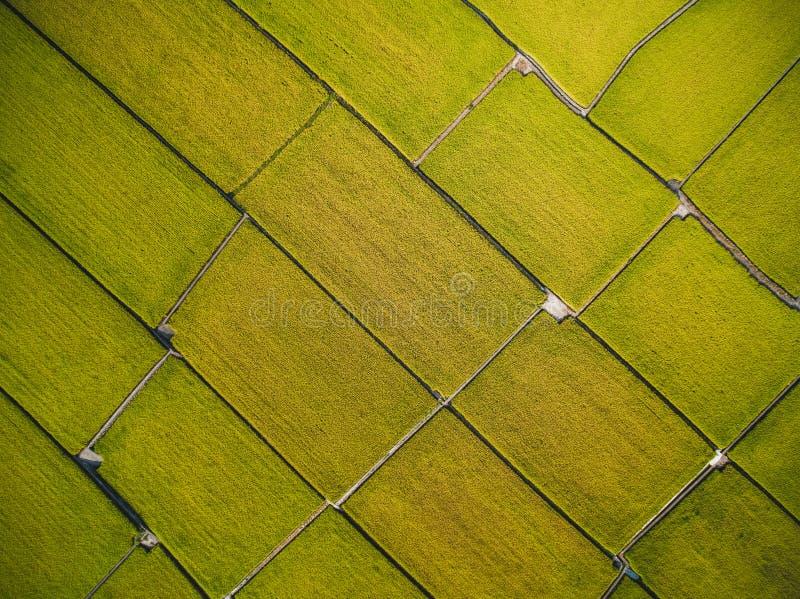 Vue aérienne de rizière photo libre de droits