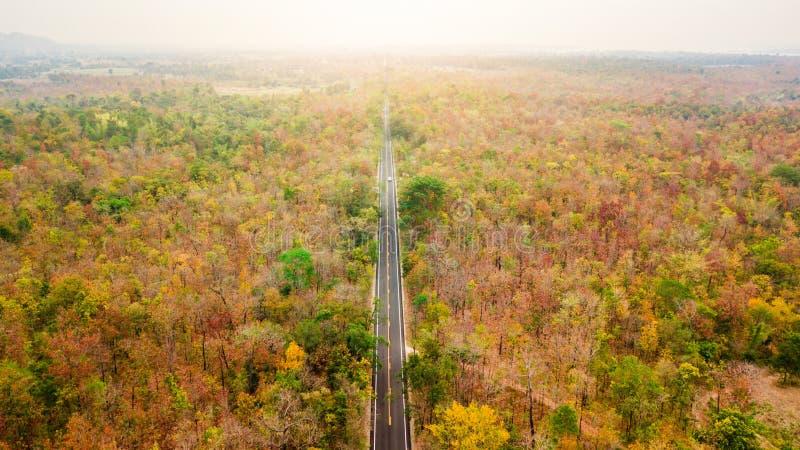 Vue aérienne de route dans la forêt d'automne au coucher du soleil Landscap étonnant images libres de droits