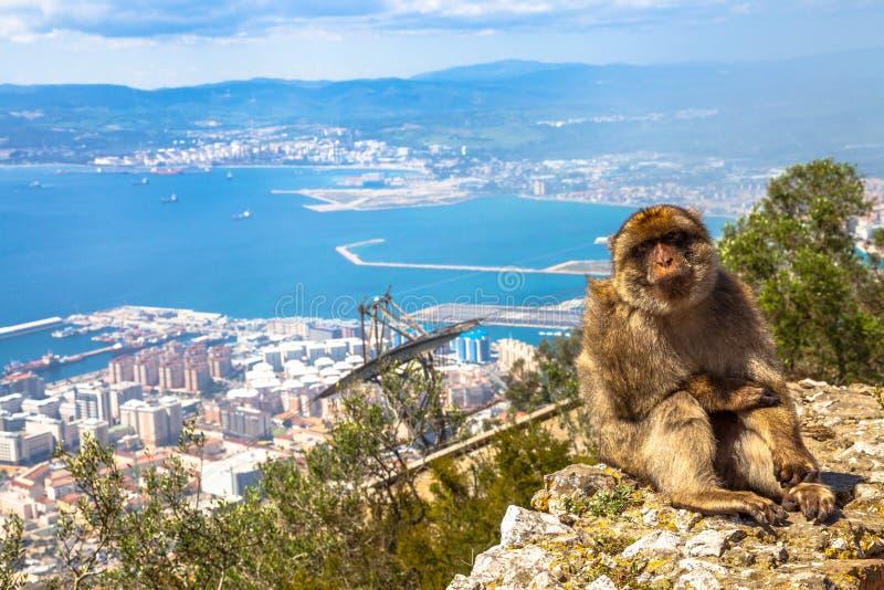 Vue aérienne de singe du Gibraltar images libres de droits