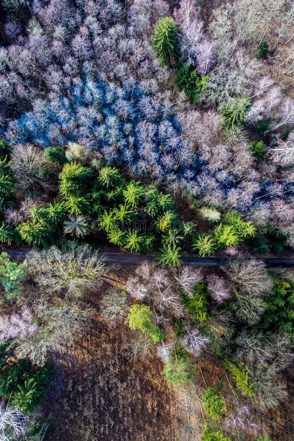 Vue aérienne de stupéfier la forêt multicolore avec la route photos libres de droits