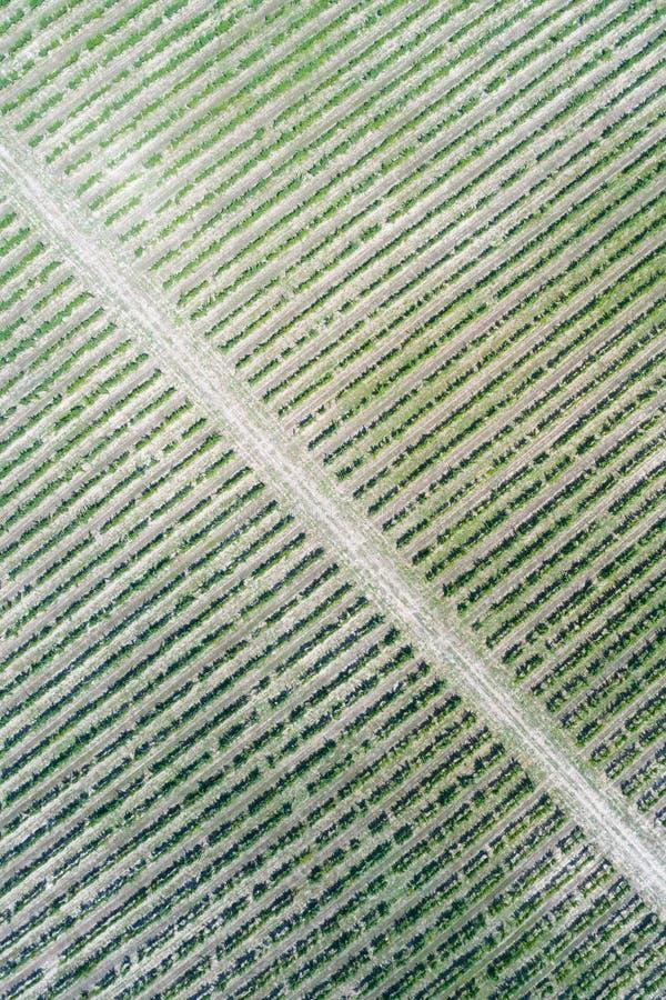 Vue aérienne de vigne images stock