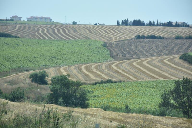 Vue aérienne des champs de récolte photos libres de droits