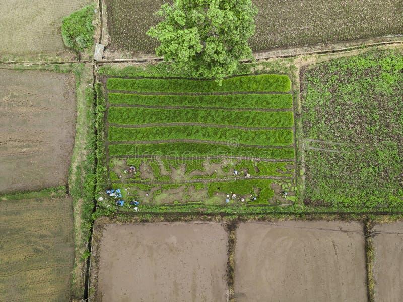 Vue aérienne des champs de terrasse de riz Le mode de vie des personnes images stock