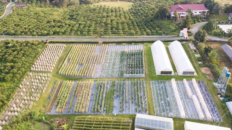 Vue aérienne des complots agricoles, complot d'attribution au printemps, pré photos stock