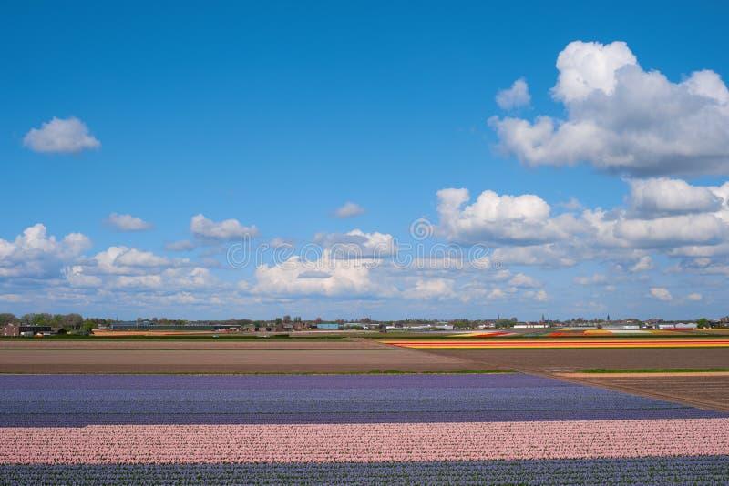 Vue aérienne des gisements de fleur, Pays-Bas, l'Europe photo libre de droits