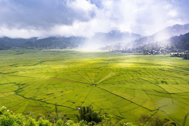 Vue aérienne des gisements de riz de toile d'araignée de Lingko tandis que pilier de lumière du soleil images stock