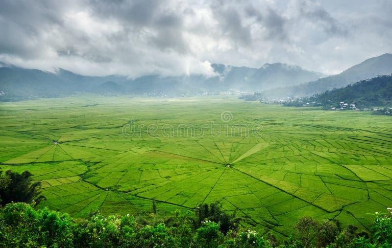 Vue aérienne des gisements verts de riz de toile d'araignée de Lingko avec la perforation de lumière du soleil par des nuages au  images stock