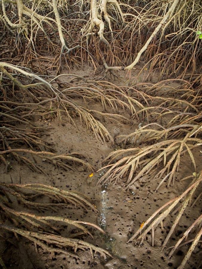 Vue aérienne des racines de palétuvier dans la boue photo libre de droits