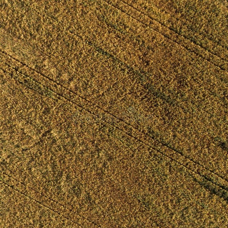 Vue aérienne du champ avec la récolte d'automne photo stock