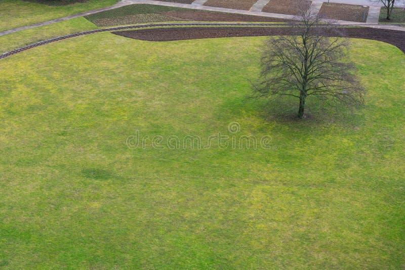 Vue aérienne simple ab de seul de champ d'arbre de parc vert herbeux dehors photo stock