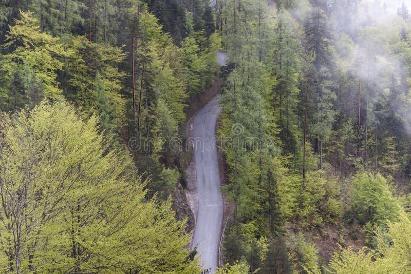 Vue aérienne sur l'itinéraire simple de forêt de pays photo libre de droits