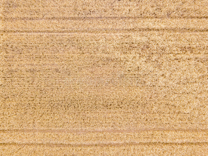 Vue aérienne sur un champ de blé photo libre de droits