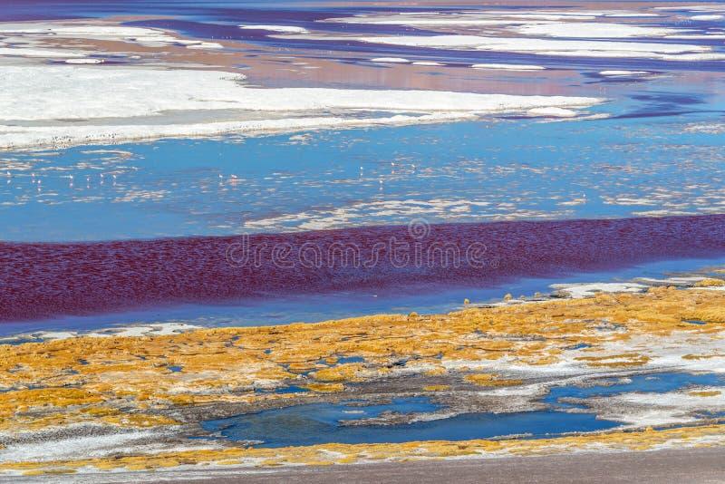 Vue abstraite de Laguna Colorada, lac de sel dans la province de Sur Lipez, Potosi, Bolivie image libre de droits