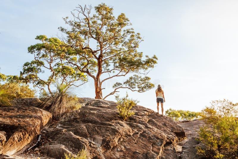 Vue arrière d'une femme sous le vieil arbre grand à la surveillance de falaise de montagne photo libre de droits