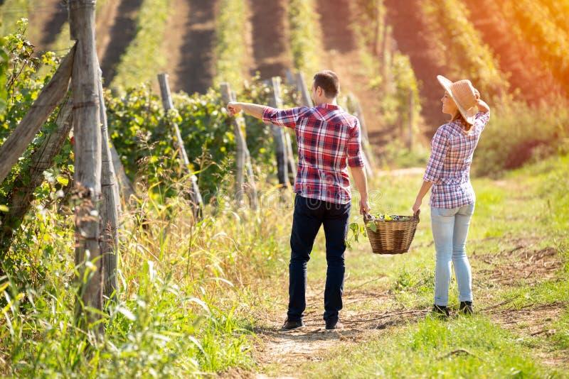 Vue arrière de jeunes couples marchant dans le vignoble photos libres de droits
