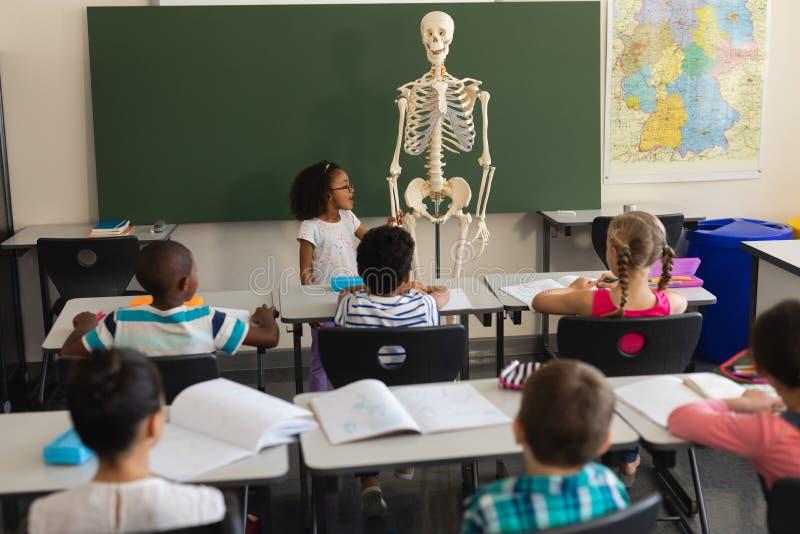 Vue arrière de petite écolière expliquant le modèle squelettique humain dans la salle de classe image libre de droits