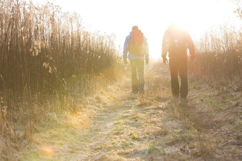 Vue arrière intégrale des randonneurs masculins marchant ensemble dans le domaine images libres de droits
