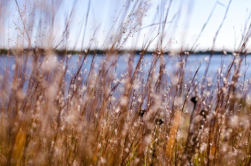 Vue artistique de foyer des herbes, des roseaux et des wildflowers morts lac à l'arrière-plan photos libres de droits
