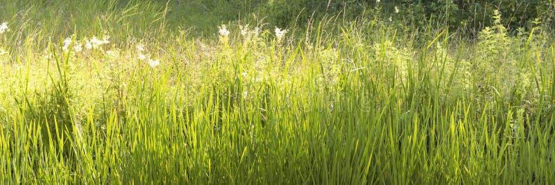 Vue attrayante sur l'herbe à plusieurs nuances de vert à la lumière du soleil chaude pendant l'été L'image donne l'impression d'u photos libres de droits