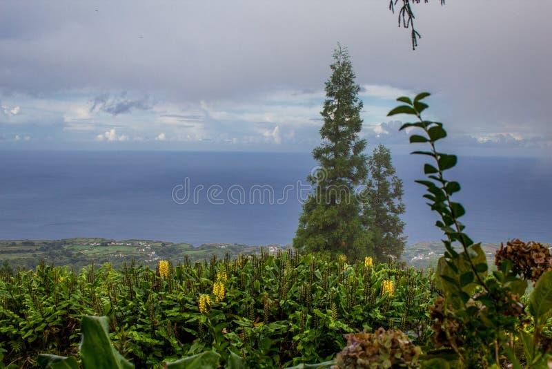 Vue au-dessus d'île nuageuse de sao Miguel Island, Açores, Portugal photos libres de droits
