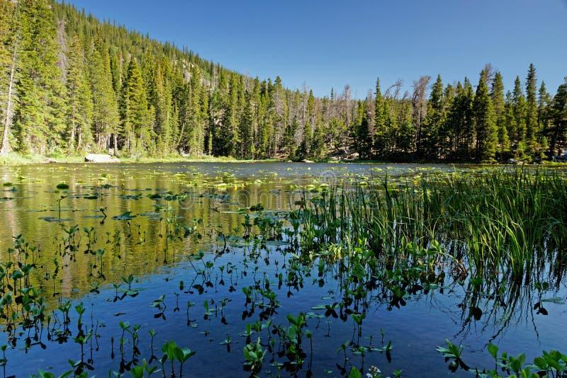 Vue au-dessus de lac nymph en parc national de montagne rocheuse dans le Colorado image libre de droits