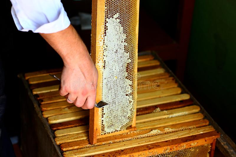 Vue avec des abeilles nid d'abeilles avec déboucher la fourchette Miel cru étant moissonné des ruches d'abeille Concept de l'apic photos libres de droits