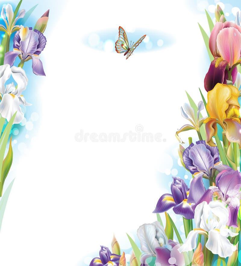 Vue avec des fleurs d'iris illustration stock